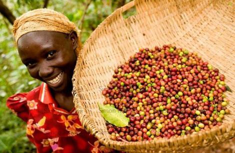 fairtradecoffeeworker